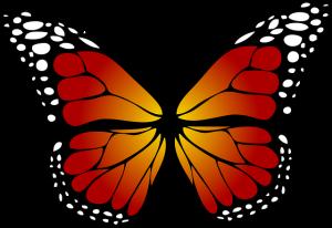 butterfly-1662471_640
